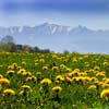 Spring in the Carpathian Mountains Image