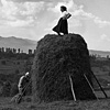 People of Maramures: Piling the Haystack