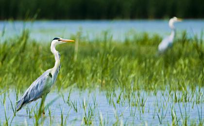 Natural Romania